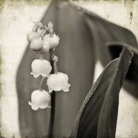 Little bells flower photograph Lily of the Valley sepia home decor