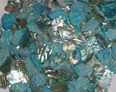 Tumbled  Turquoise Abalone Pieces For Shell Craft - 1kg