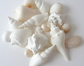 Beach Wedding Decor Seashells -  White Beach Wedding Sea Shell Mix - 1 lb Assorted White Shell Mix - Bulk Shells