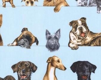 "Last 28"" REMNANT - Robert Kaufman Fabric - Curious Canines -Peeking Puppies - Sky Blue"