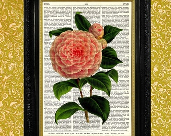 Pink Camellia Print Dictionary Page Art Recycled Vintage Dictionary Page Upcycled Art Mixed Media