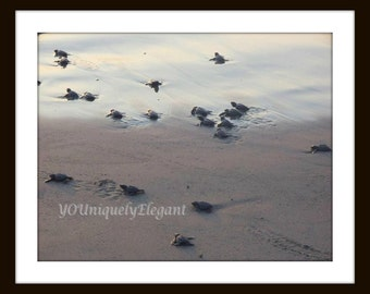 Photography, Beach Photography - Baby Sea Turtles - Nature Photography, fine art print, Wall Decor, Beach Decor