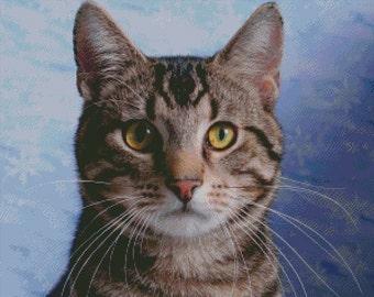 American Shorthair Cat Cross Stitch Pattern 001