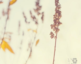 nature winter photo print - whimsical photography, light, bokeh, pretty, colour photo, fine art photography,