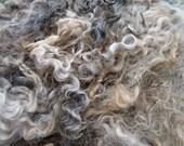 Lincoln Lamb Locks raw wool fleece 2.5 lbs.