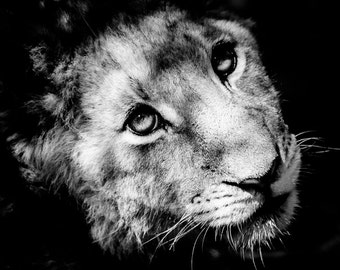 Safari Animal Art, Lion Cub - African Wildlife Fine Art Black and White Nature Photography - Kids Room Art