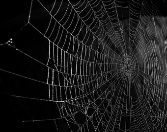 Spider Web Photo Photography Signed Square Print Halloween Decor