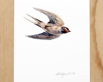 Swallow - a blue bird digital print