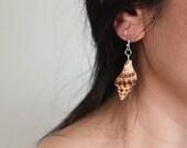 Sea Shells Earring, Natural Sea Shell Earrings, Sea shell jewellery . Beach jewellery, Beach Accessories