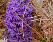 photograph purple swirling flower hidden with white surround