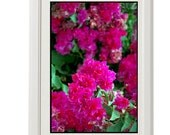 floral poster, flower power, magenta blossoms, 8''x10'', free shipping
