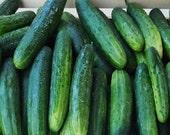 Heirloom Marketmore 76 Cucumber Seeds  Non GMO
