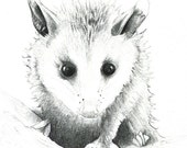 """Baby Opossum art print of a drawing available 5x7"""" or 8x10"""""""