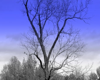 Bare Tree, Color Photography, Fine Art Photography, Nature Photography