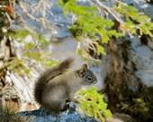 Gray Squirrel Photograph Nature Photography Squirrel Art Woodland Art Print Cabin Decor
