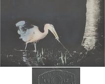 Blue heron taking its own photo at night antique tinted art photo Hobart Roberts