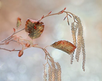 "Winter Photography - three leaves river pink blue winter wall decor sparkly wall art nature photography 16x24 11x14 print bokeh ""Witchcraft"""