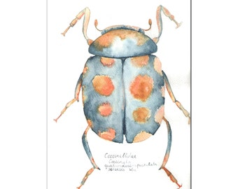 Ladybird original watercolor painting size 10 x 7 in