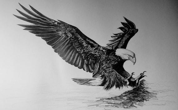 Dibujo de aguila volando a lapiz  Imagui