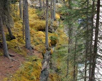 Print, Landscape, Athabasca Falls Ecosystem, Alberta Canada 2013