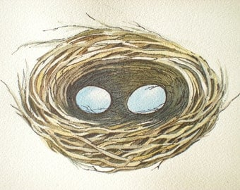 Birds nest with two blue eggs