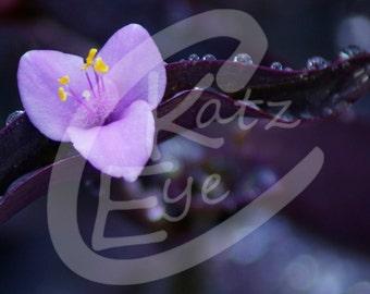 Fine Art Photograph - Purple Flower
