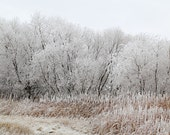 Winter Landscape, Frost Art, Home Decor, White, Frozen lake, Brown, Nature Photograph, Winter Photography, Trees - Tree style