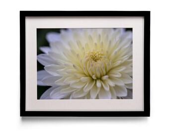 Chrysanthemum (Mum) Flower Macro Photography Print [8x10, 11x14 16x20, 18x24 or 24x36]