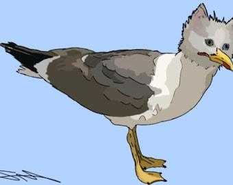 Cat Gull