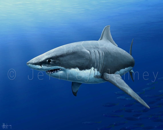 Great White Shark Painting 8x10 Fine Art Print From An  Great White Shark Painting