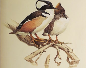 """Vintage Hooded Merganser Print Full Color 1960s Frameable Picture, Wall Art, Print of Bird Watercolor by J.F. Lansdowne, 9 5/8"""" x 12 5/16"""