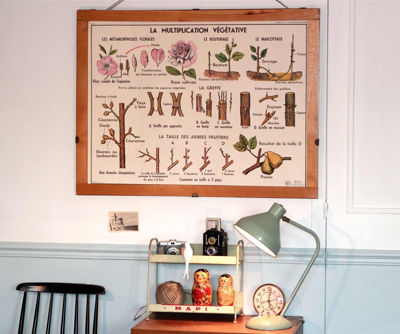 botanique vintage affiche scolaire double face d 39 cole. Black Bedroom Furniture Sets. Home Design Ideas