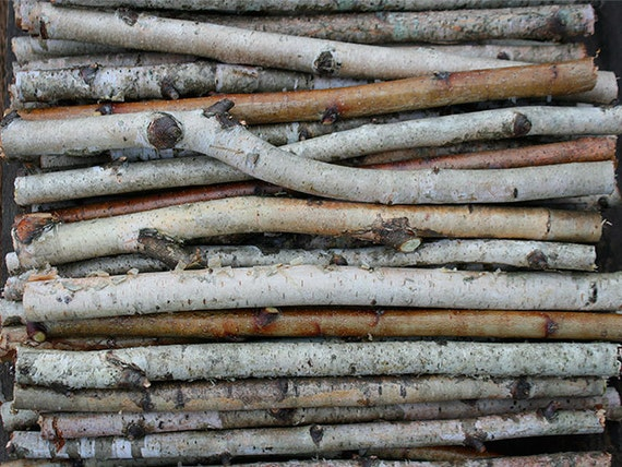 Birch Wood Logs ~ White birch branches wood logs paper by exstore