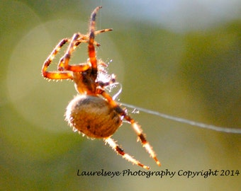 Hanging by a Thread Photo Greeting Card