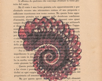 Pag. 61, Seashell, red dust