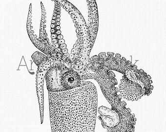 Octopus Old image Sea Life Drawing Octopus Argonauta - Vintage illustration