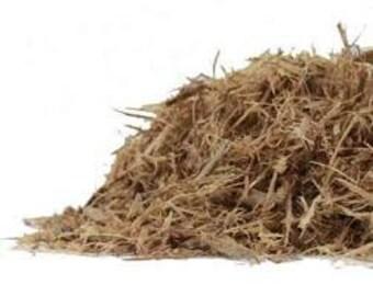 Jamaican Dogwood Bark (Wild Harvested)