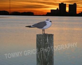 Sea Gull taking a break