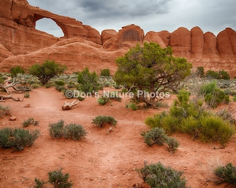 Skyline Arch, Arches National Park, Utah. #2049