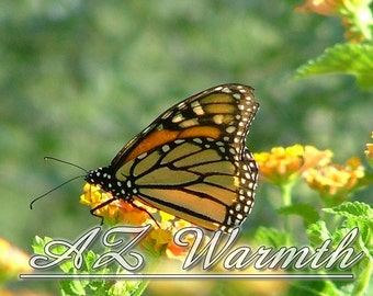 Butterfly Photography Monarch Butterflies Photography Printable Photo Instant Digital Download Photo birthday christmas gift ideas under 20
