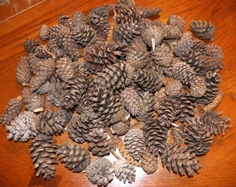Over 100 Real Pine Cones Pine Cones Centerpiece Pine