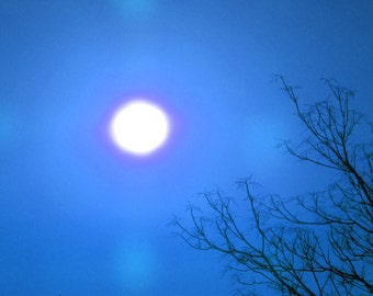 Blue Sunny Skies, Nature Photography, Wall Art Print, View of the Sun, Blue Sky & Tree Top Photo