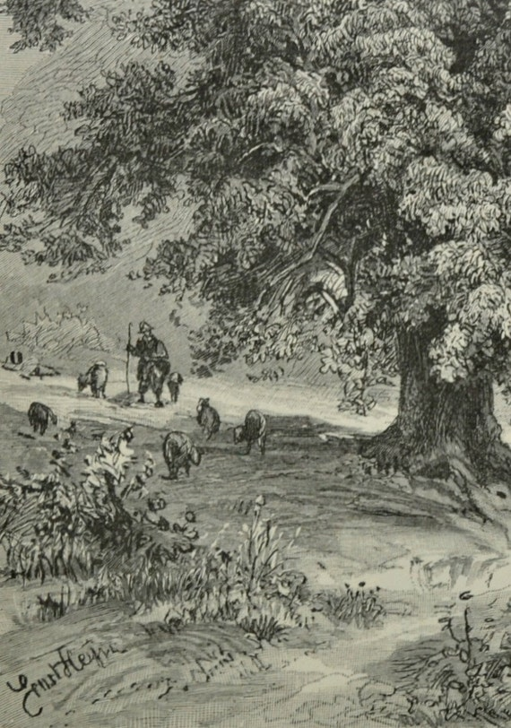 Lime tree engraving. Botany print. Old book plate, 1904. Antique  illustration. 110 years lithograph. 9'6 x 6'2 inches.