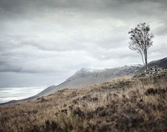 Nearing Inveroran, original fine art photography, print, landscape, highland, nature, 8x12,  mountain, tree, windswept, scotland