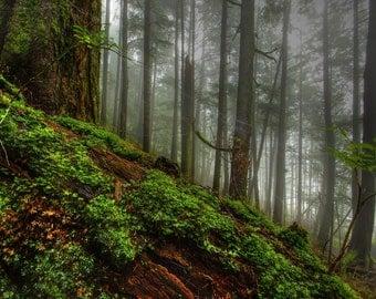Mix of 4 different Live Woodland Moss & Lichen~Star,Feather,Pincushion,Tree,Irish~ Terrarium~ Native~SHADE/WOODLAND garden~Hardy~Naturalize