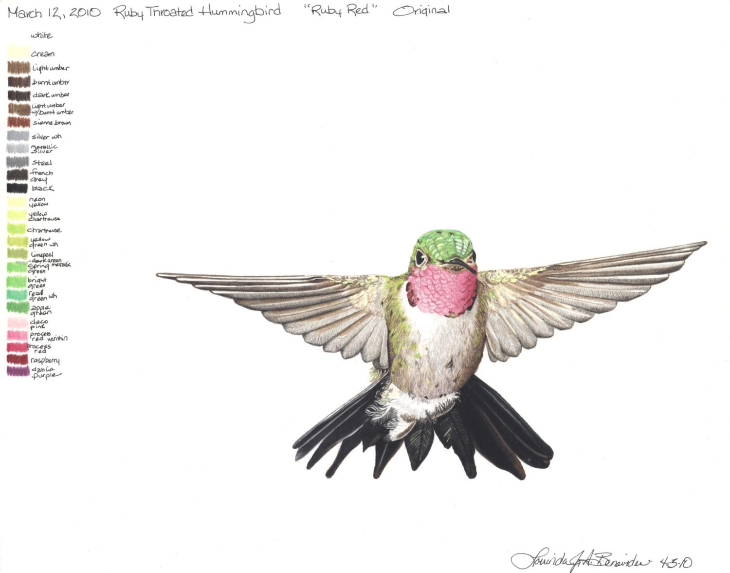 Realistic Hummingbird Drawings