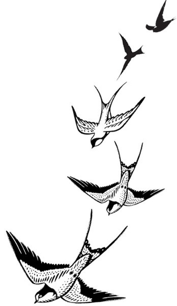 Swallows flying drawing