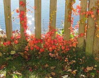 Feng Shui Garden/Outdoors Reading [Personal Feng Shui Gardening/Outdoor Assessment - Feng Shui Decorating]