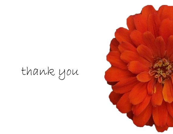 Thank you card: Package of  10 Orange Zinnia flower, personally photographed, package of 10
