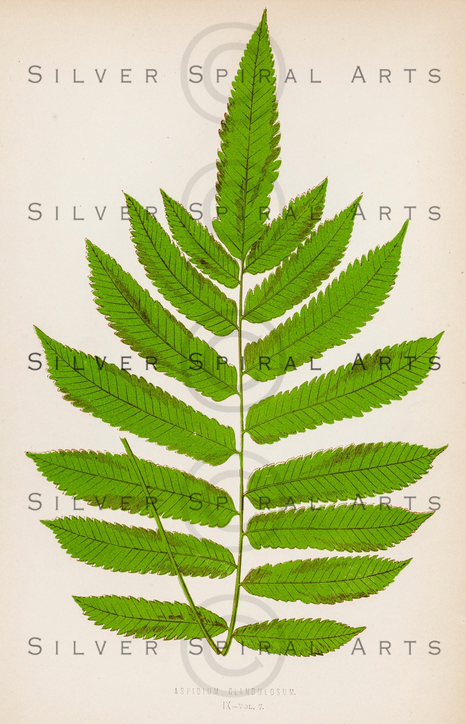 Fern Pictures Download Instant Download Vintage Fern
